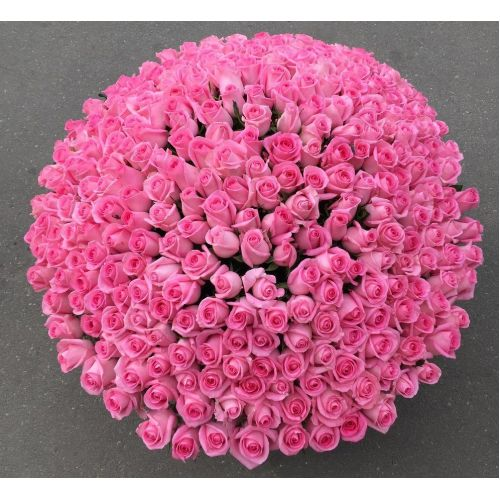 Купить на заказ 501  роза с доставкой в Хромтау
